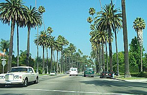 Image of beverlypalms.jpg