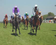 Image of horseracers.jpg