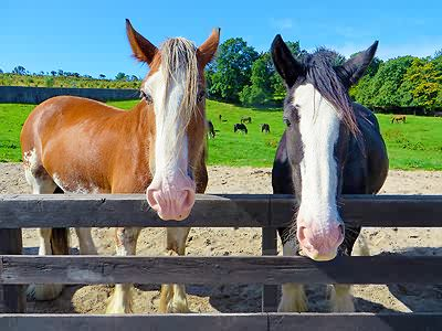 Image of two_horses_at_fence.jpg